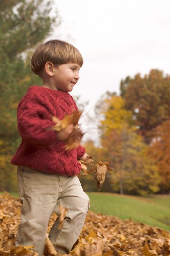 Boy carrying dried autumnal leaves, New Jersey, USA : Stock Photo