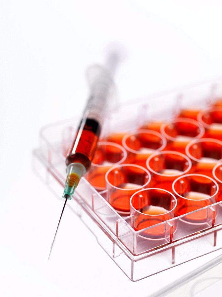 Stock Photo: 4128R-10704 Stem cell research