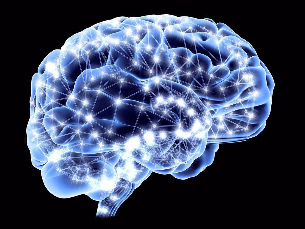Brain, neural network : Stock Photo