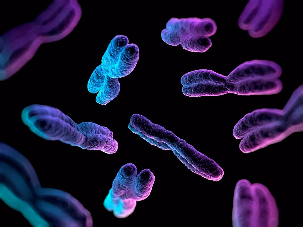 Stock Photo: 4128R-14441 Chromosomes, computer artwork.