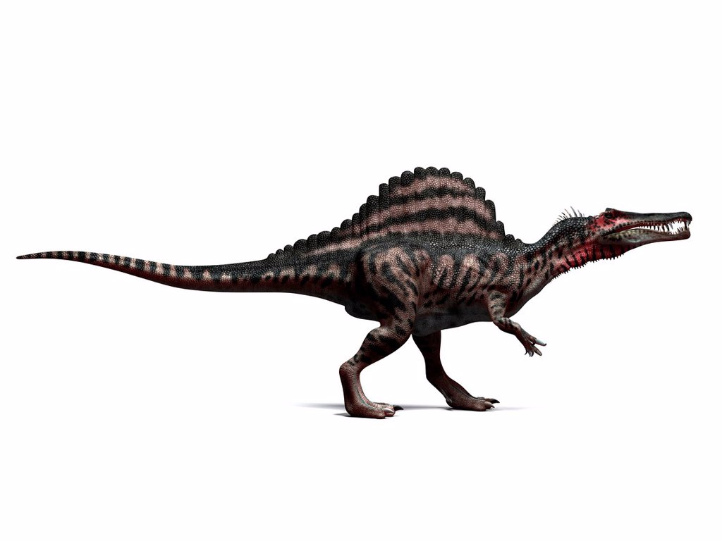 Stock Photo: 4128R-14561 Spinosaurus dinosaur, computer artwork. This dinosaur lived 95 to 80 million years ago during the Late Cretaceous period.