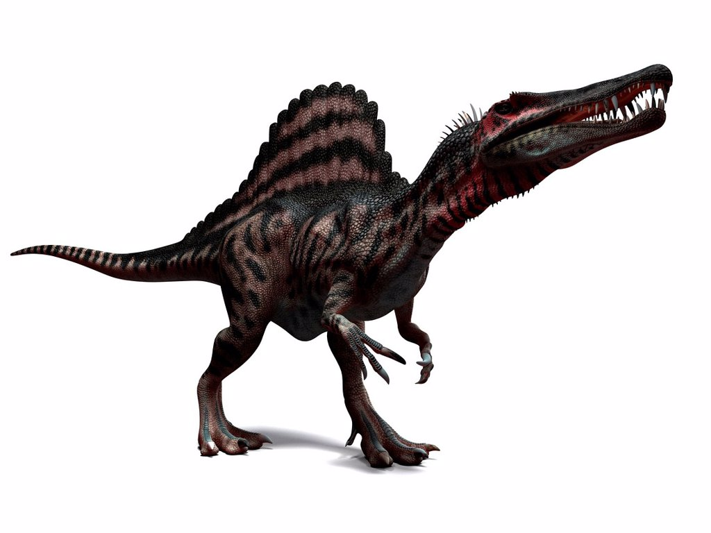 Stock Photo: 4128R-14562 Spinosaurus dinosaur, computer artwork. This dinosaur lived 95 to 80 million years ago during the Late Cretaceous period.