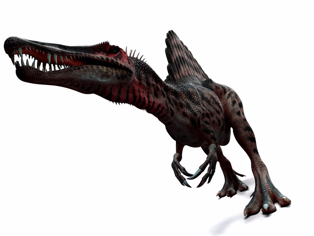 Stock Photo: 4128R-14563 Spinosaurus dinosaur, computer artwork. This dinosaur lived 95 to 80 million years ago during the Late Cretaceous period.