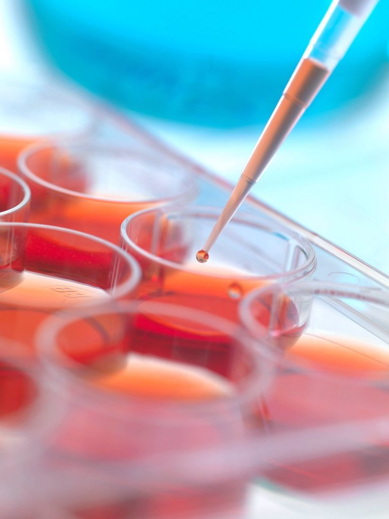 Biological research. Pipetting cultures into a multiwell sample tray. : Stock Photo