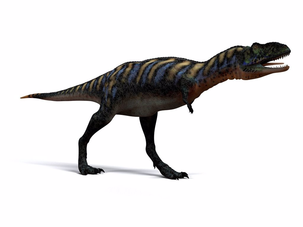 Stock Photo: 4128R-14871 Aucasaurus dinosaur. Computer artwork of an Aucasaurus, a medium sized dinosaur from Argentina that existed during the late Cretaceous, around 100 to 65 million years ago.