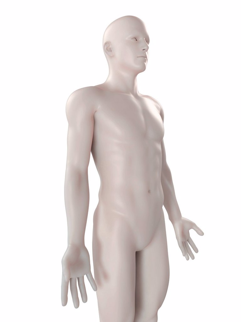 Stock Photo: 4128R-15083 Male anatomy, computer artwork.