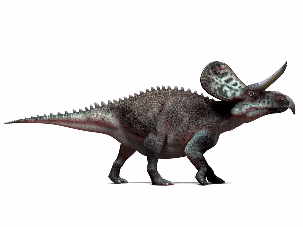 Zuniceratops dinosaur, computer artwork. This dinosaur lived approximately 90 million years ago during the Turonian age of the Late Cretaceous period. : Stock Photo