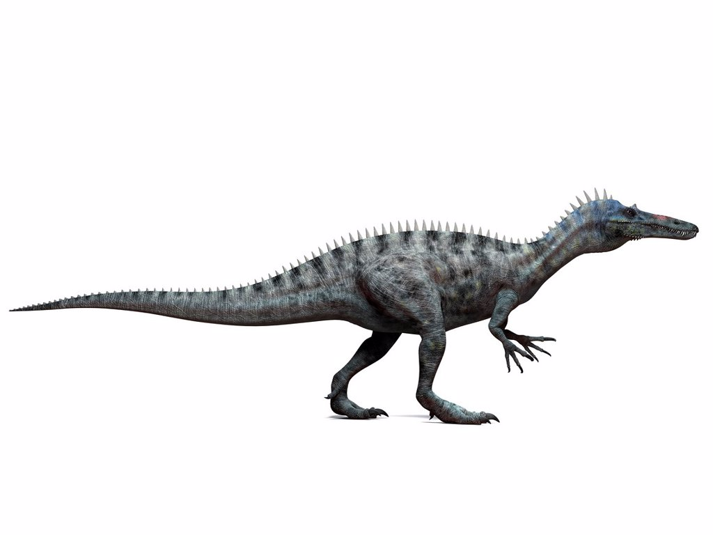 Suchomimus dinosaur, computer artwork. This dinosaur lived 110 to 120 million years ago during the middle of the Cretaceous period. : Stock Photo