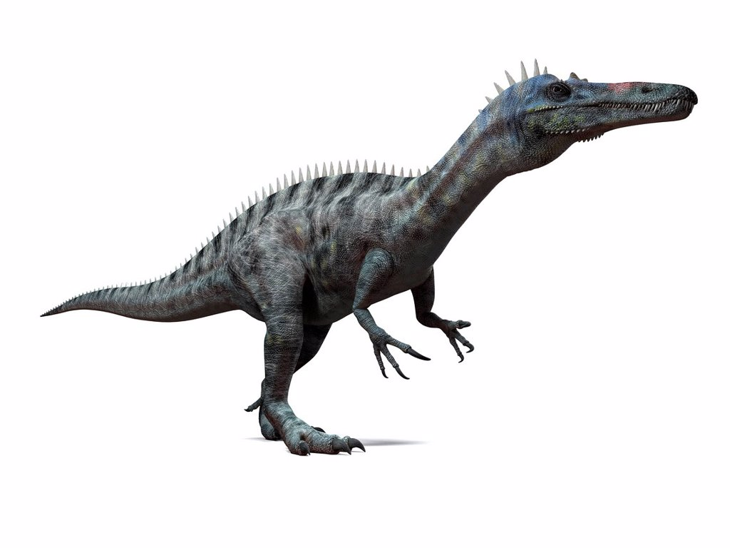 Stock Photo: 4128R-15439 Suchomimus dinosaur, computer artwork. This dinosaur lived 110 to 120 million years ago during the middle of the Cretaceous period.