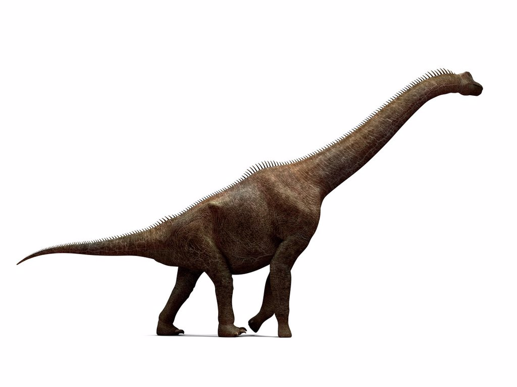 Stock Photo: 4128R-15998 Brachiosaurus dinosaur, computer artwork. This is the tallest known dinosaur, standing up to 16 metres tall. It lived during the late Jurassic period, between 155 and 145 million years ago.