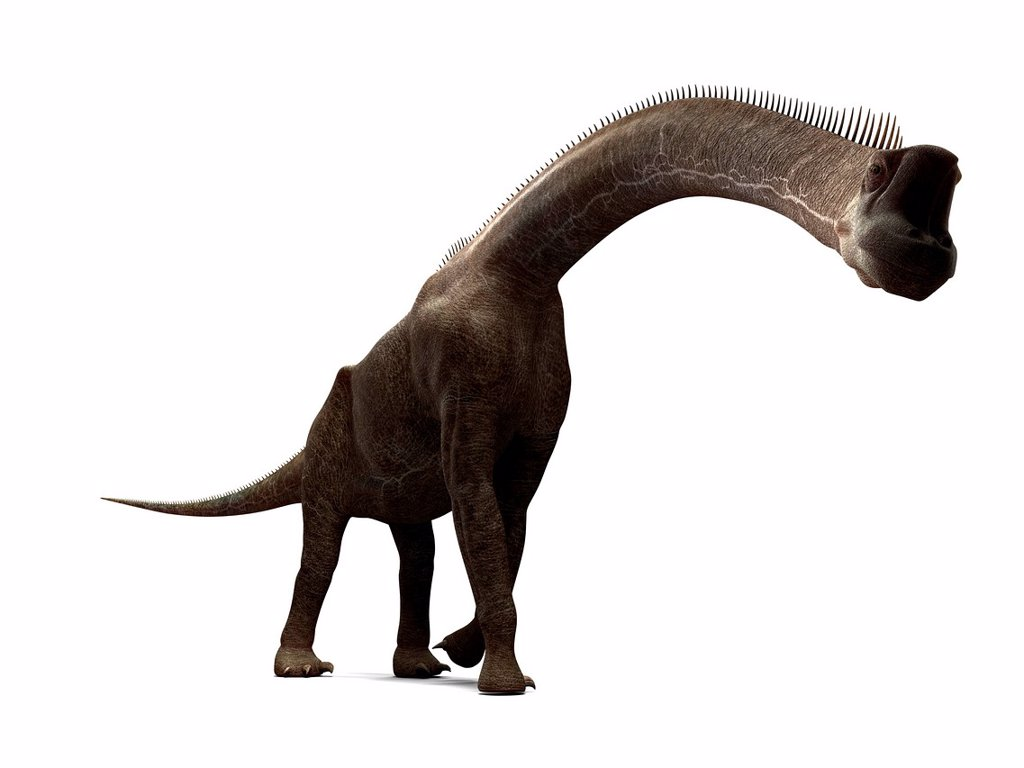 Brachiosaurus dinosaur, computer artwork. This is the tallest known dinosaur, standing up to 16 metres tall. It lived during the late Jurassic period, between 155 and 145 million years ago. : Stock Photo