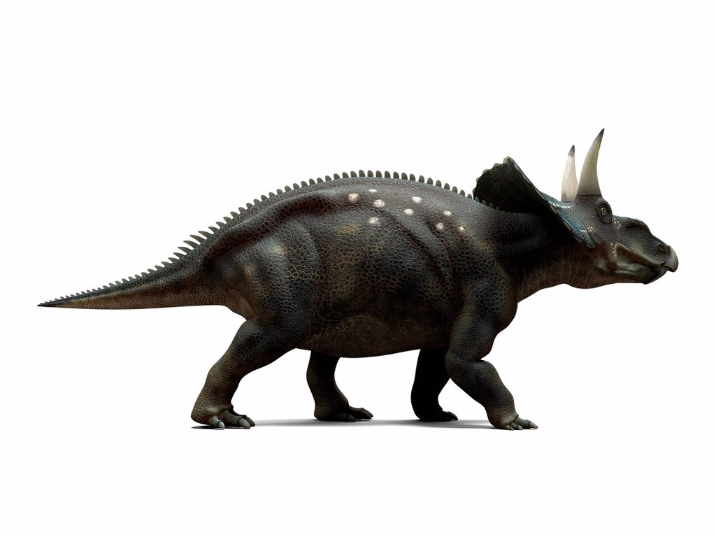 Stock Photo: 4128R-16003 Nedoceratops dinosaur, computer artwork. This dinosaur, formerly known as Diceratops, lived 70 million years ago during the Cretaceous period.