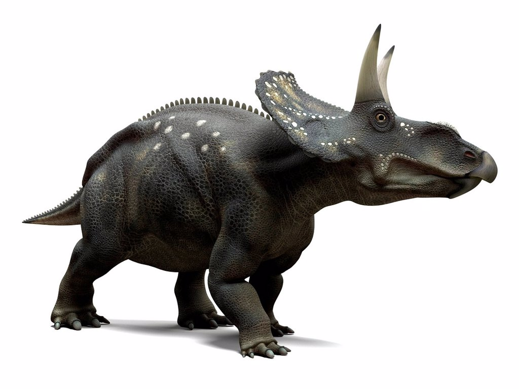 Stock Photo: 4128R-16004 Nedoceratops dinosaur, computer artwork. This dinosaur, formerly known as Diceratops, lived 70 million years ago during the Cretaceous period.