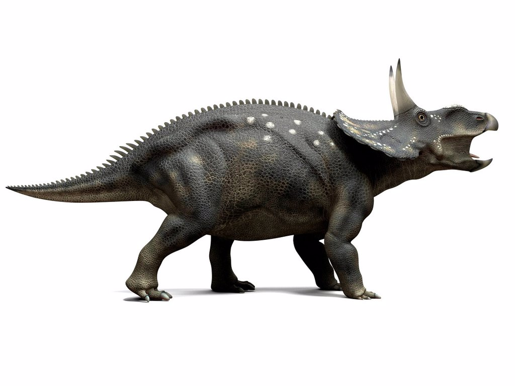 Stock Photo: 4128R-16006 Nedoceratops dinosaur, computer artwork. This dinosaur, formerly known as Diceratops, lived 70 million years ago during the Cretaceous period.
