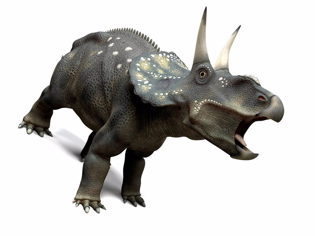 Nedoceratops dinosaur, computer artwork. This dinosaur, formerly known as Diceratops, lived 70 million years ago during the Cretaceous period. : Stock Photo