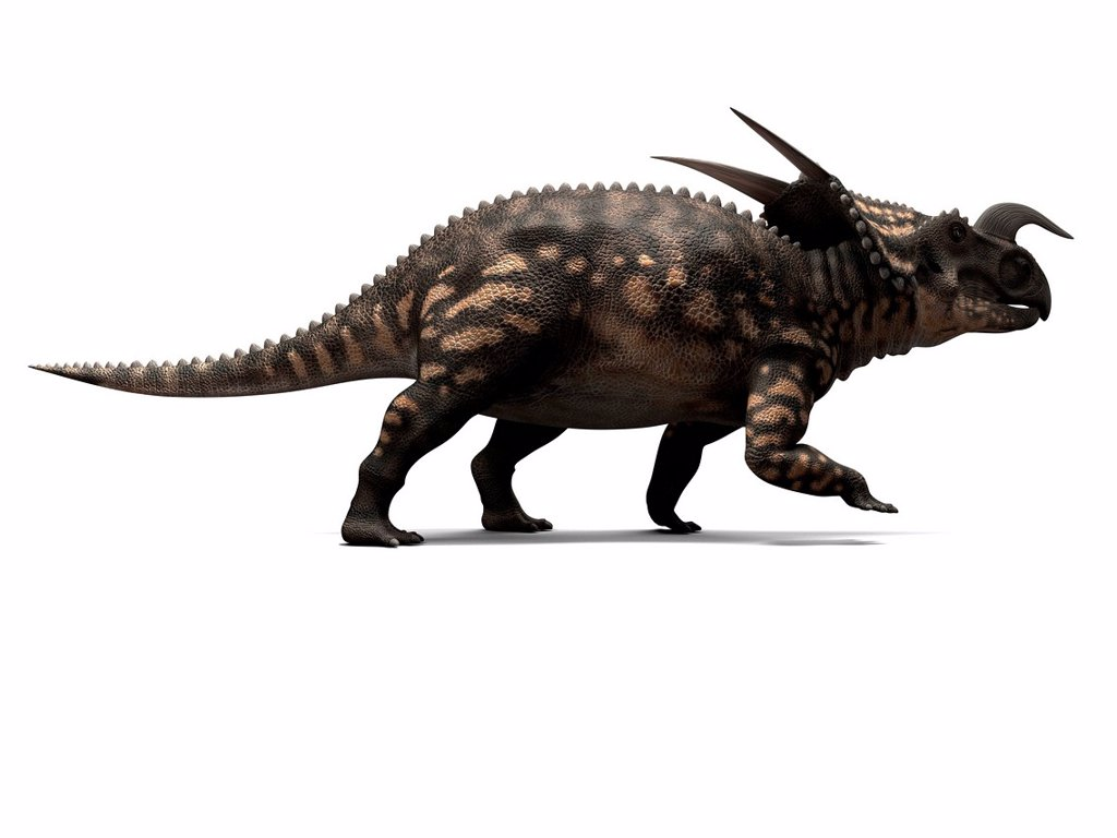 Stock Photo: 4128R-16009 Einiosaurus dinosaur, computer artwork. This dinosaur lived 65 to 100 million years ago during the Late Cretaceous period.
