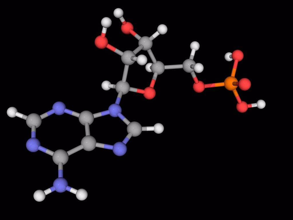 Adenosine monophosphate AMP, molecular model. Nucleotide used as a monomer in RNA. Atoms are represented as spheres and are colour_coded: carbon grey, hydrogen white, nitrogen blue, oxygen red and phosphorus yellow. : Stock Photo