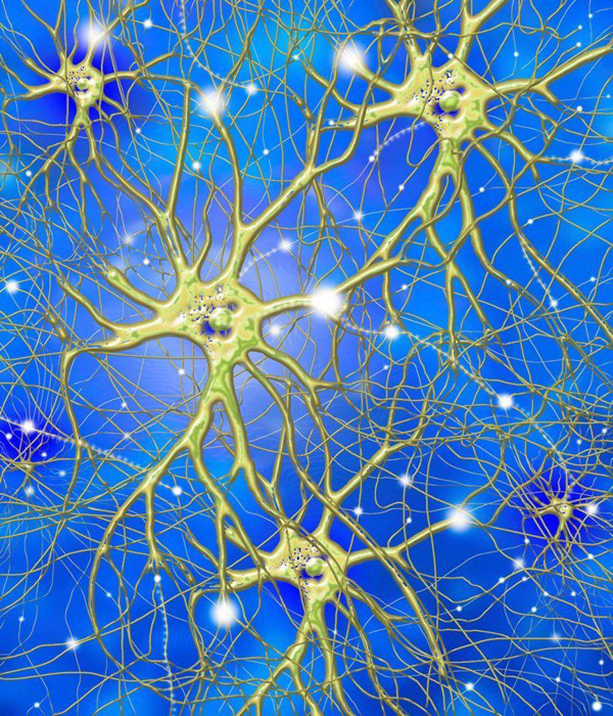 Nerve cells, artwork : Stock Photo