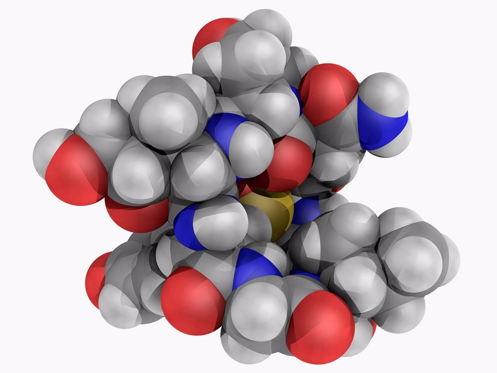Alpha_Amanitin, molecular model. Deadly amatoxin poison found in mushrooms e. g. death cap. Atoms are represented as spheres and are colour_coded: carbon grey, hydrogen white, nitrogen blue, oxygen red and sulfur yellow. : Stock Photo