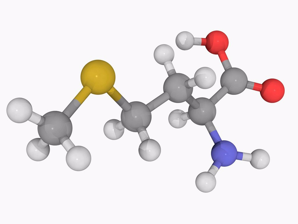 Methionine, molecular model. Essential alpha_amino acid. Atoms are represented as spheres and are colour_coded: carbon grey, hydrogen white, nitrogen blue, oxygen red and sulfur yellow. : Stock Photo