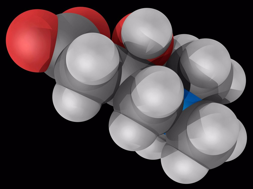 Stock Photo: 4128R-17098 Carnitine, molecular model. Organic compound required for the transport of fatty acids into the mitochondria. Nutritional supplement. Atoms are represented as spheres and are colour_coded: carbon grey, hydrogen white, nitrogen blue and oxygen red.