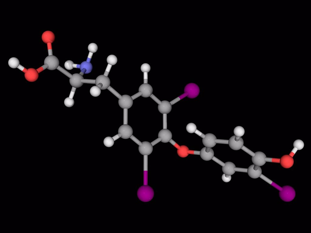 Stock Photo: 4128R-17483 Liothyronine, molecular model. Thyroid hormone used to treat hypothyroidism and myxedema coma. Atoms are represented as spheres and are colour_coded: carbon grey, hydrogen white, nitrogen blue, oxygen red and iodine violet.