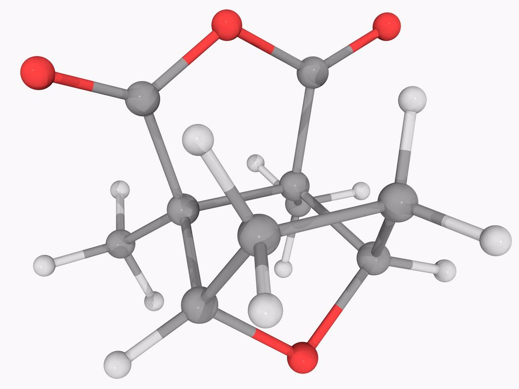 Stock Photo: 4128R-18172 Cantharidin, molecular model. Poisonous terpenoid secreted by many species of blister beetle. When diluted it is used to remove warts and tattoos. Atoms are represented as spheres and are colour_coded: carbon grey, hydrogen white and oxygen red.