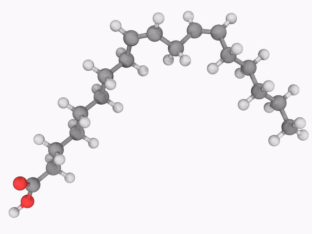 Stock Photo: 4128R-18256 Linoleic acid, molecular model. Polyunsaturated fatty acid found in the lipids of cell membranes. Abundant in many vegetable oils. Atoms are represented as spheres and are colour_coded: carbon grey, hydrogen white and oxygen red.