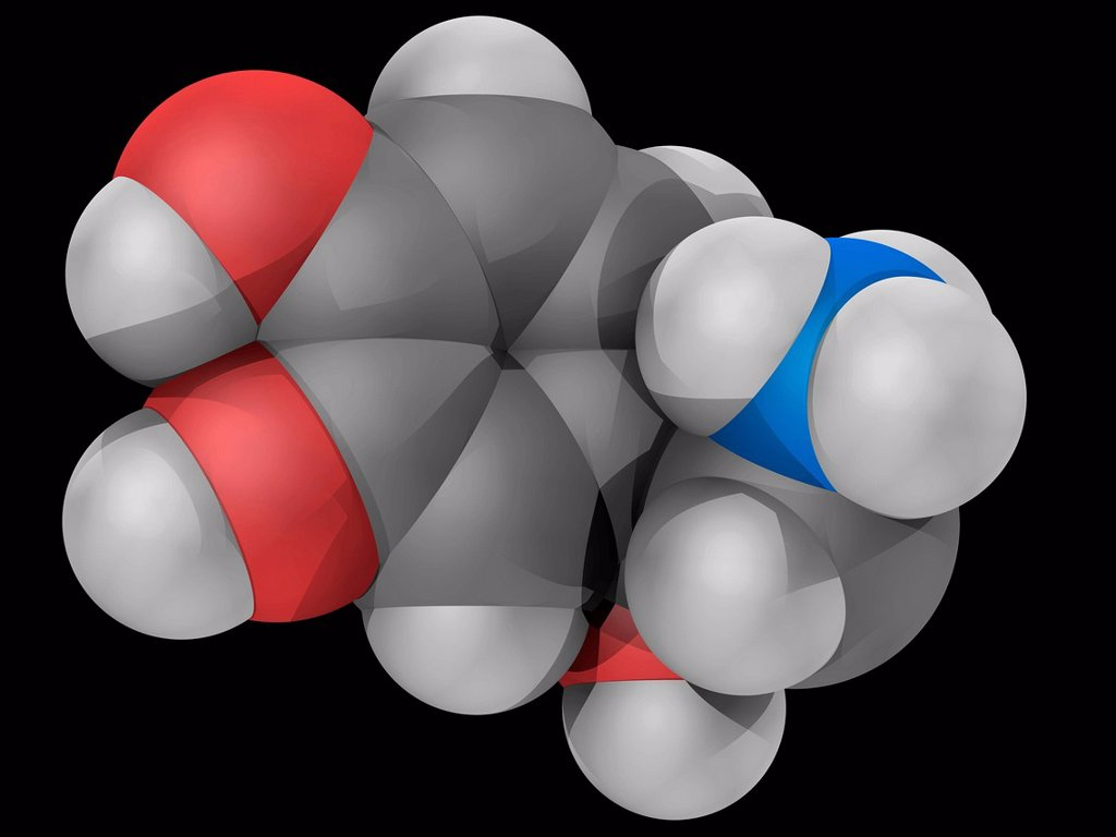 Stock Photo: 4128R-18446 Norepinephrine, molecular model. Catecholamine acting also as a hormone and a neurotransmitter. Atoms are represented as spheres and are colour_coded: carbon grey, hydrogen white, nitrogen blue and oxygen red.