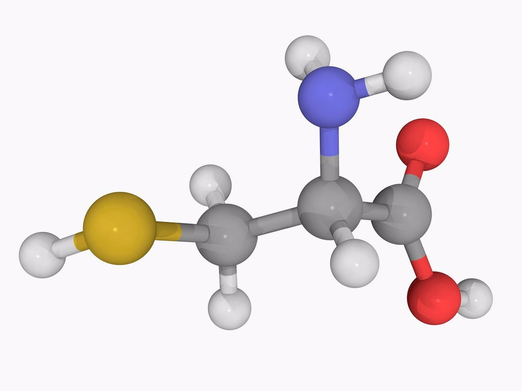 Cysteine, molecular model. Non_essential alpha_amino acid. Atoms are represented as spheres and are colour_coded: carbon grey, hydrogen white, nitrogen blue, oxygen red and sulfur yellow. : Stock Photo