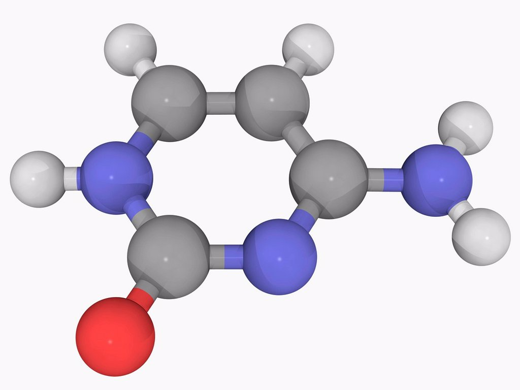 Stock Photo: 4128R-18560 Cytosine, molecular model. One of the four main bases found in DNA and RNA, where it is paired with guanine. Atoms are represented as spheres and are colour_coded: carbon grey, hydrogen white, nitrogen blue and oxygen red.