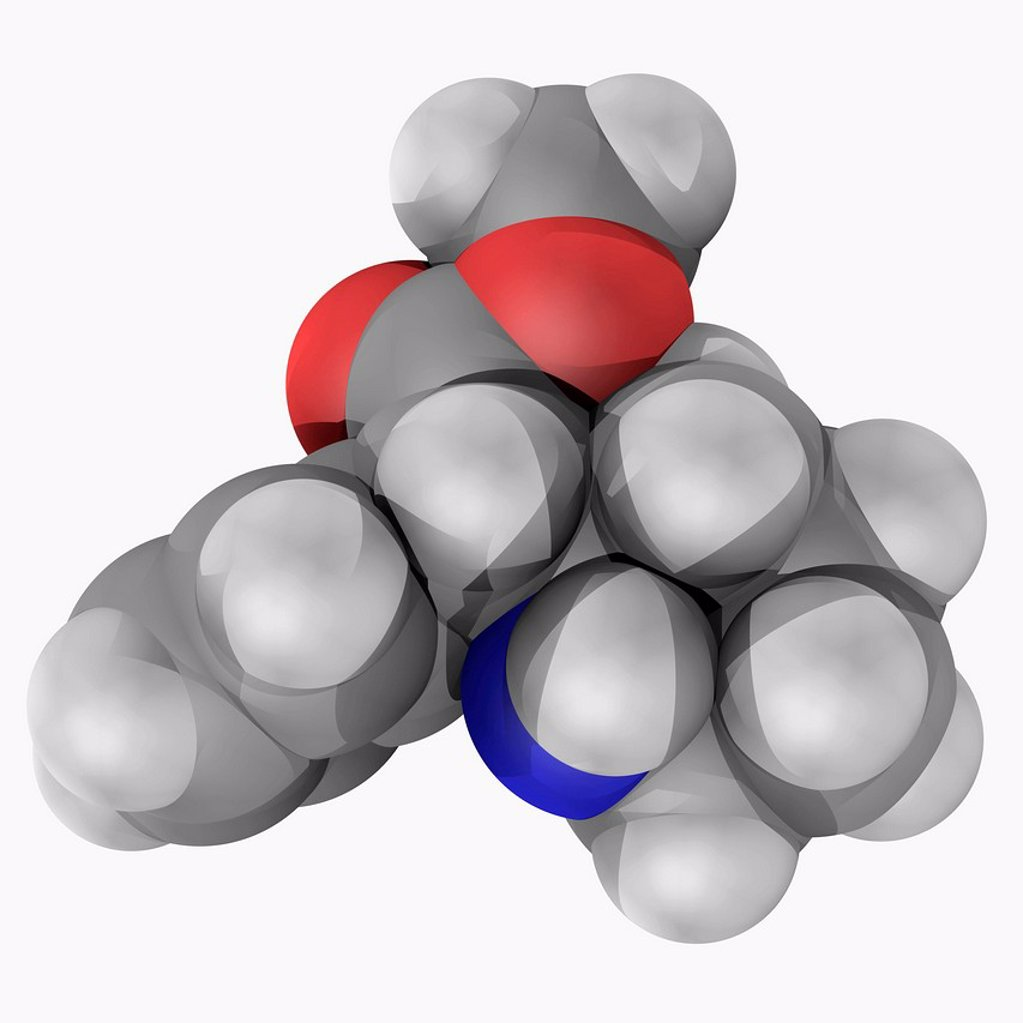 Stock Photo: 4128R-18580 Methylphenidate, molecular model. Psychostimulant drug approved for treatment of ADHD, postural orthostatic tachycardia syndrome and narcolepsy. Atoms are represented as spheres and are colour_coded: carbon grey, hydrogen white and oxygen red.
