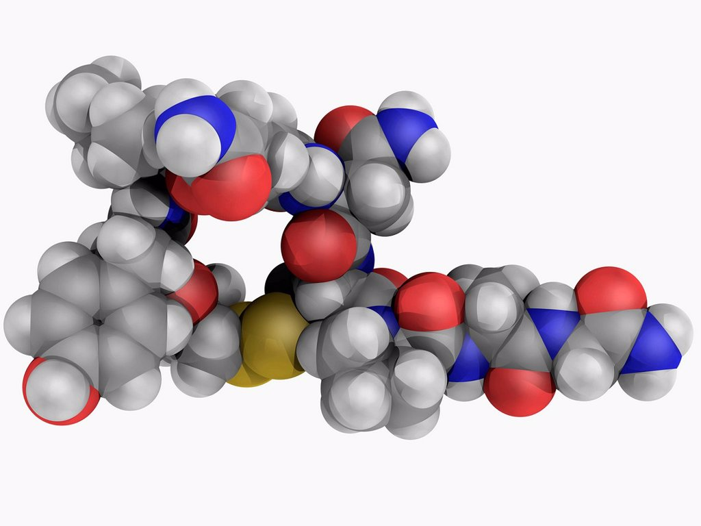 Oxytocin, molecular model. Mammalian hormone acting as a neuromodulator in brain. Atoms are represented as spheres and are colour_coded: carbon grey, hydrogen white, nitrogen blue, oxygen red and sulfur yellow. : Stock Photo