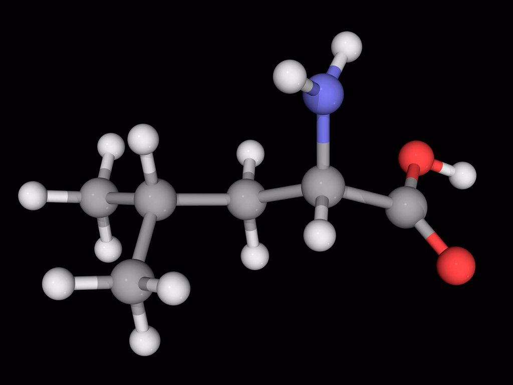 Stock Photo: 4128R-19026 Leucine, molecular model. Essential alpha_amino acid contained in eggs, soy protein, seaweed, turkey, chicken, lamb, cheese, and fish. Atoms are represented as spheres and are colour_coded: carbon grey, hydrogen white, nitrogen blue and oxygen red.