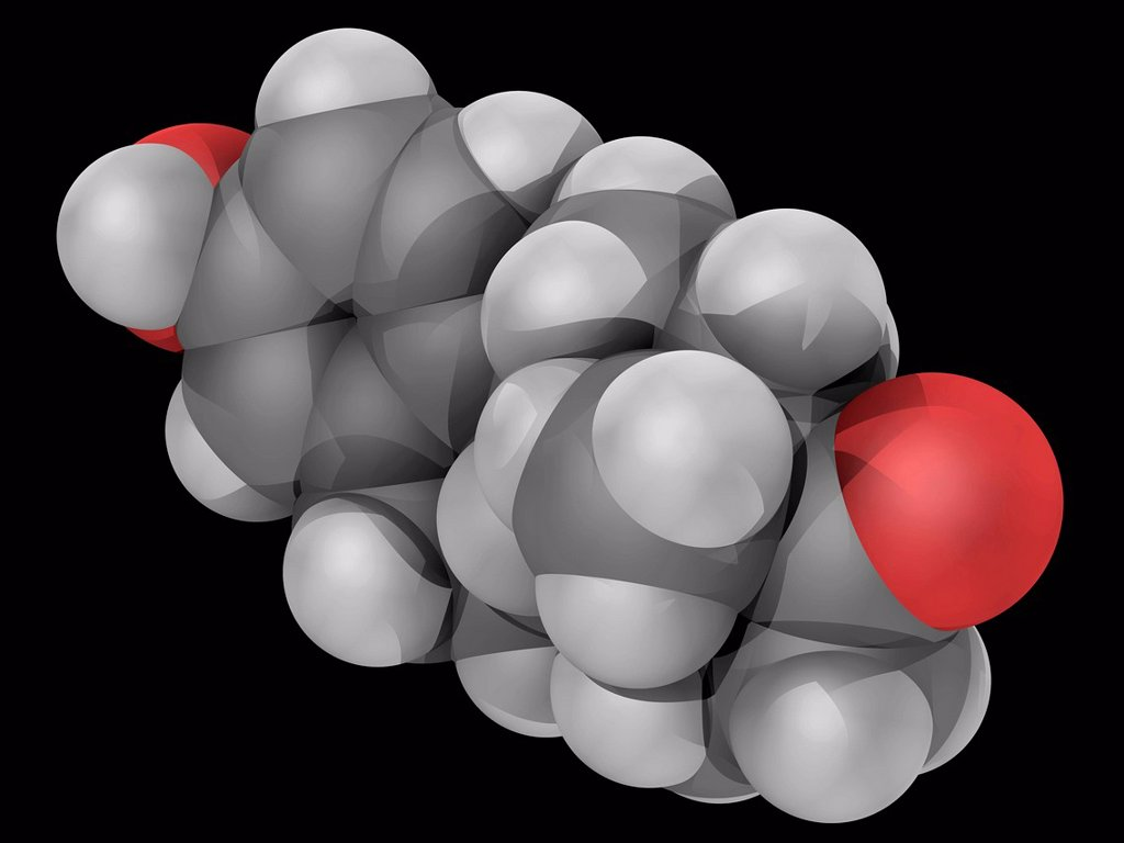 Stock Photo: 4128R-19232 Estrone, molecular model. Sex hormone, one of the three main estrogens produced by the human body estradiol, estriol and estrone. Atoms are represented as spheres and are colour_coded: carbon grey, hydrogen white and oxygen red.