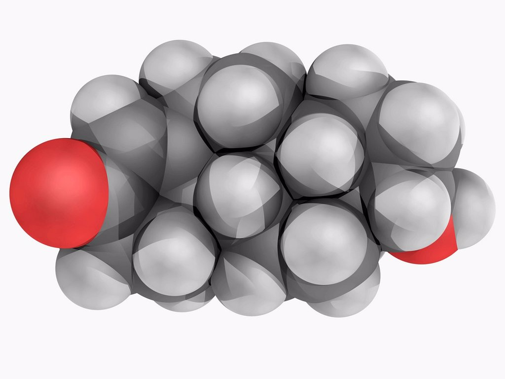 Stock Photo: 4128R-19418 Testosterone, molecular model. Steroid hormone found in most vertebrates. It plays a key role in the development of male reproductive tissues such as testis and prostrate. Atoms are represented as spheres and are colour_coded: carbon grey, hydrogen white