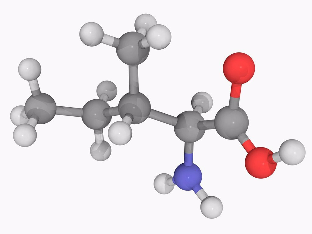 Stock Photo: 4128R-19671 Isoleucine, molecular model. Essential alpha_amino acid contained in eggs, soy protein, seaweed, turkey, chicken, lamb, cheese, and fish. Atoms are represented as spheres and are colour_coded: carbon grey, hydrogen white, nitrogen blue and oxygen red.