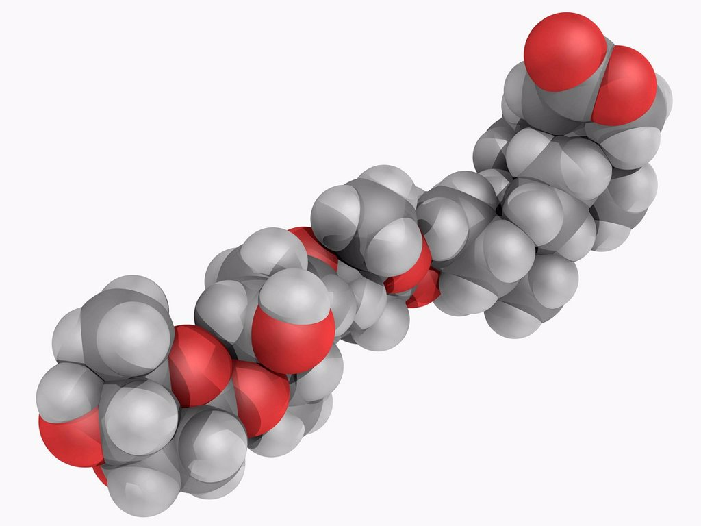 Digitoxin, molecular model. Cardiac glycoside with toxic effects. Atoms are represented as spheres and are colour_coded: carbon grey, hydrogen white and oxygen red. : Stock Photo