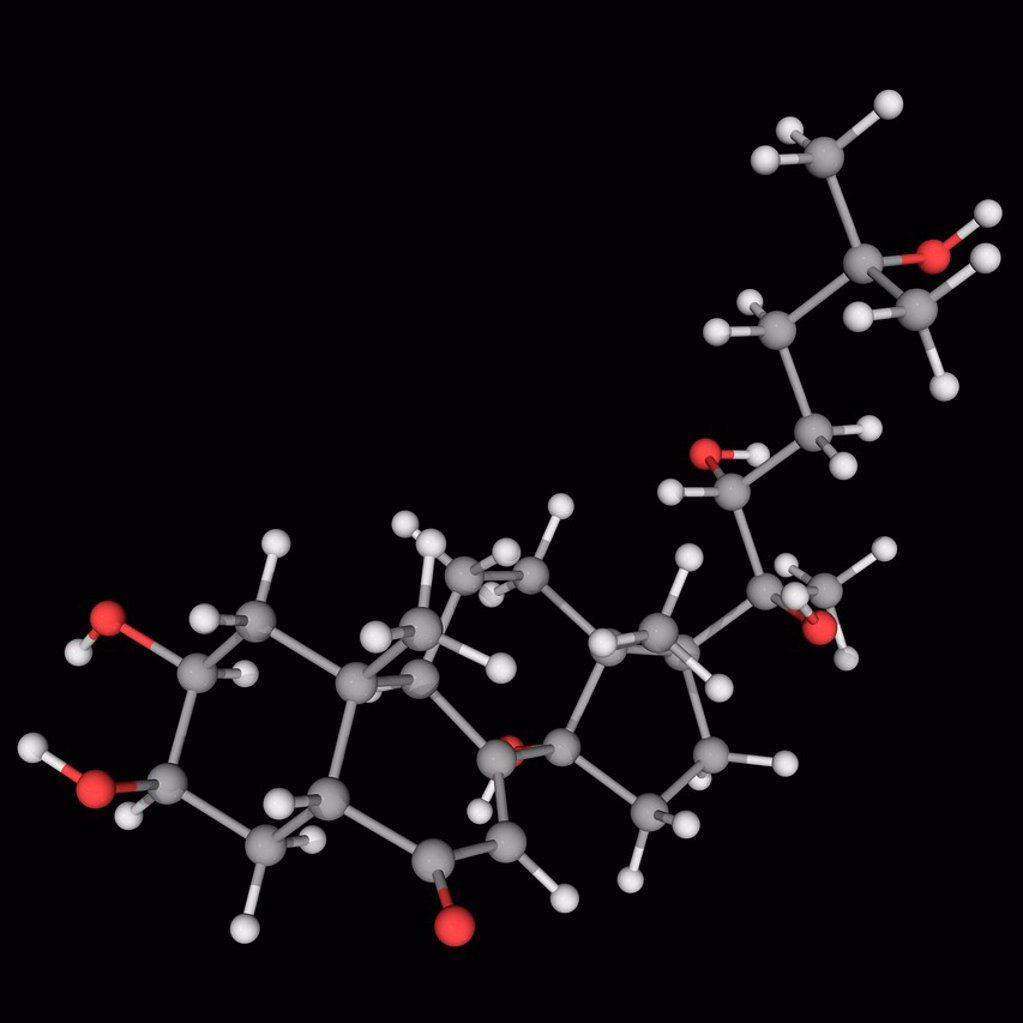 Stock Photo: 4128R-19899 Ecdysterone 20_hydoxyecdysone, 20E, molecular model. Major steroidal insect moulting hormone. Atoms are represented as spheres and are colour_coded: carbon grey, hydrogen white and oxygen red.