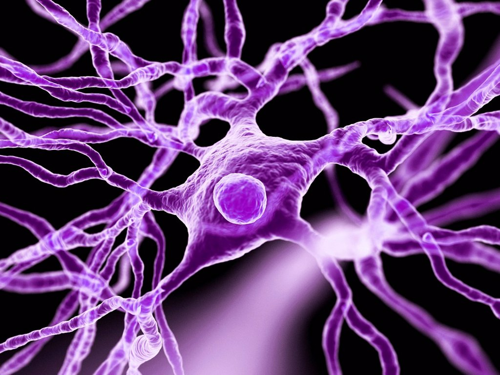 Nerve cells, artwork : Stock Photo