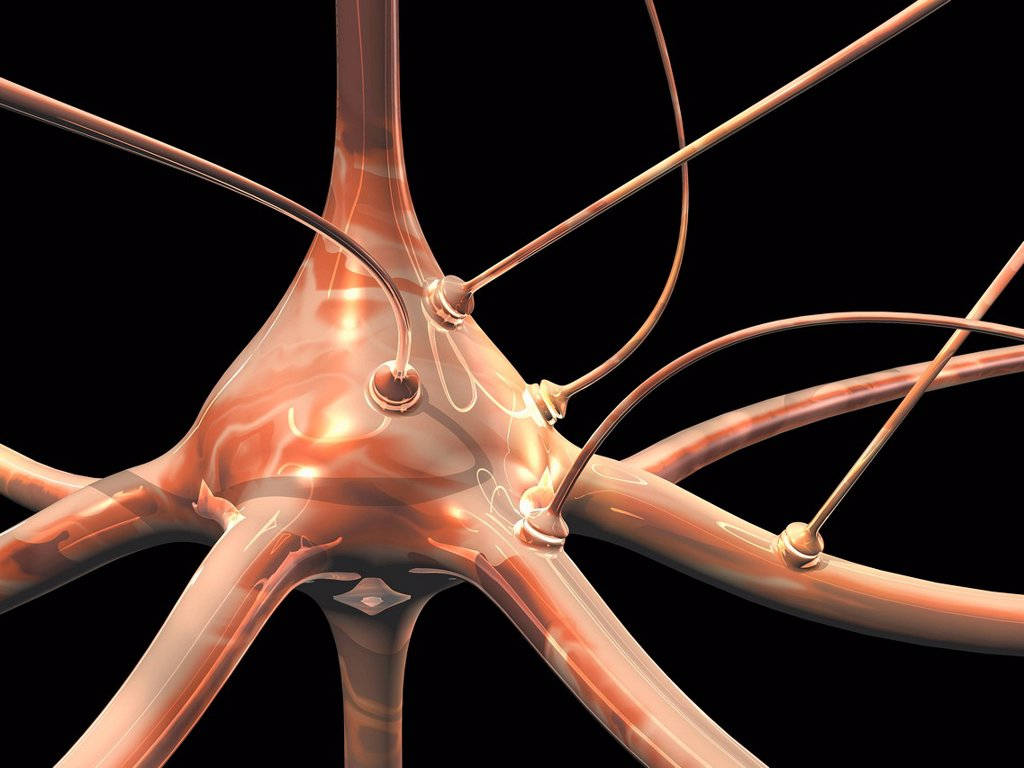 Stock Photo: 4128R-20894 Neuron and synapses, artwork