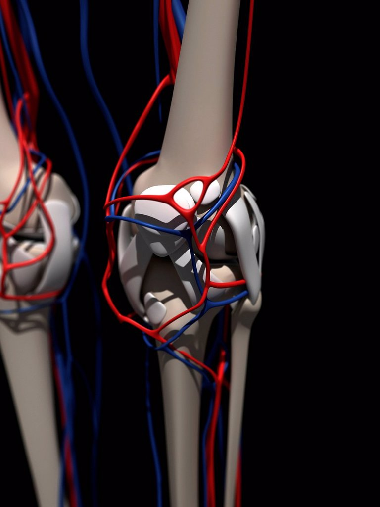 Stock Photo: 4128R-20921 Human anatomy, artwork