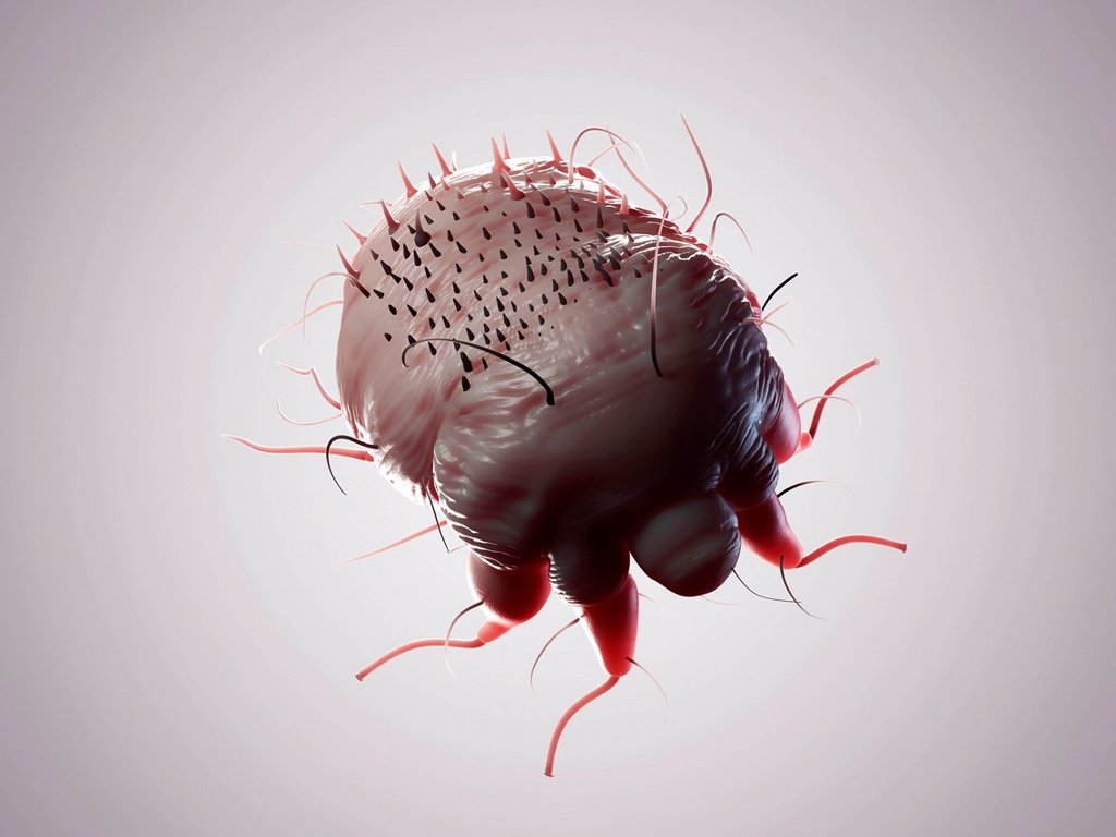 Stock Photo: 4128R-21258 Scabies mite, artwork