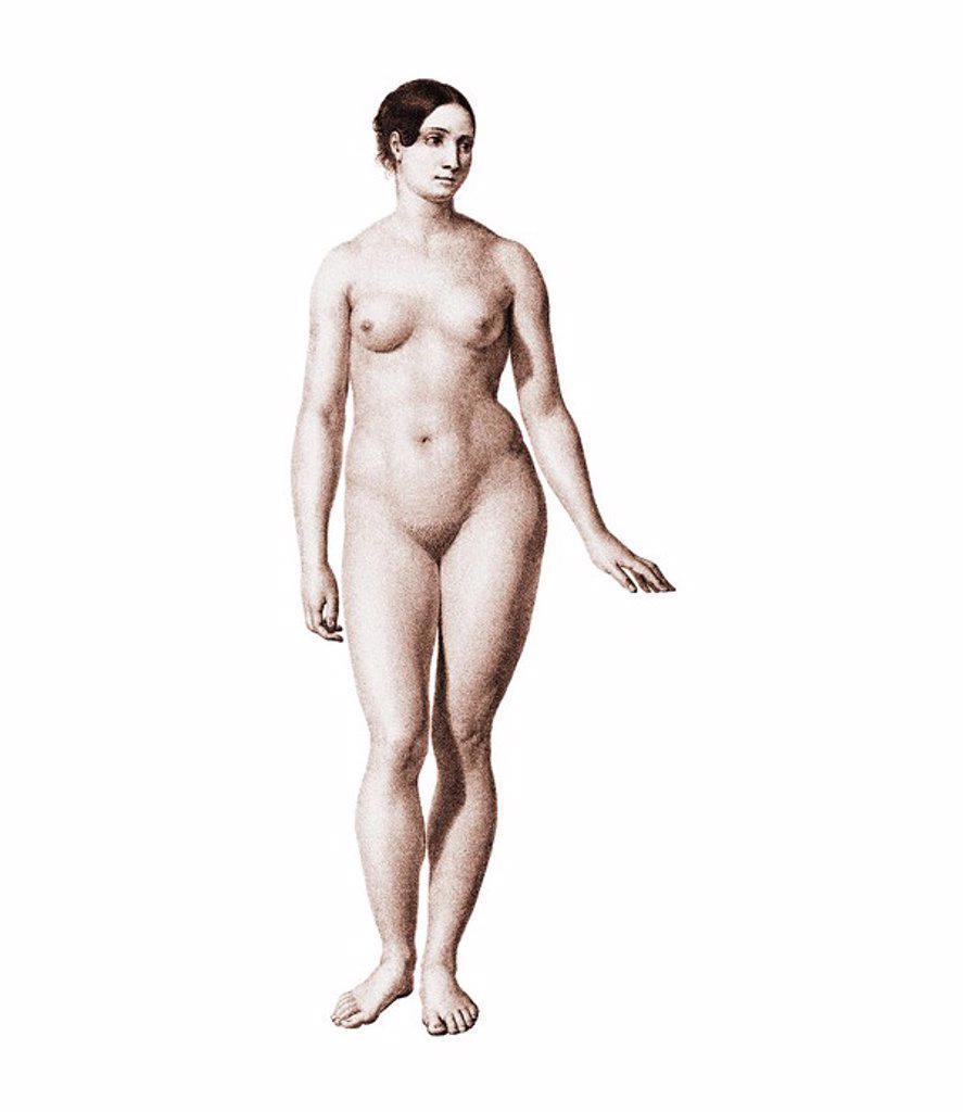 Female nude, artwork. : Stock Photo