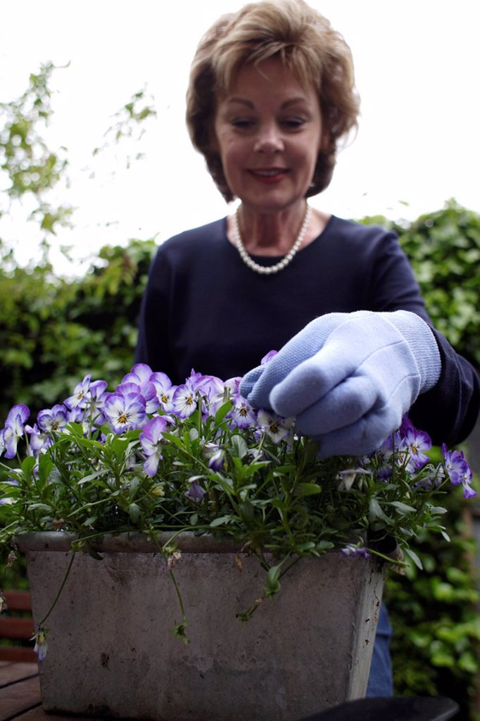 Stock Photo: 4128R-8012 Gardening
