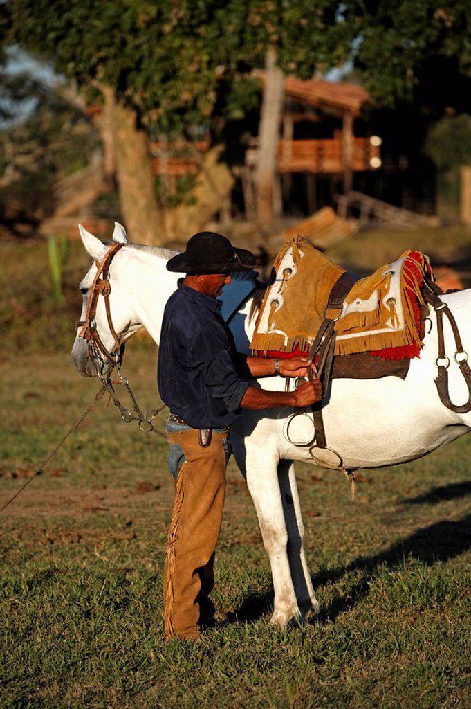 Stock Photo: 4133-11355 Pantanal Cowboy,Pantaneiro,Horse,Pantaneiro Horse,Pantanal,Brazil