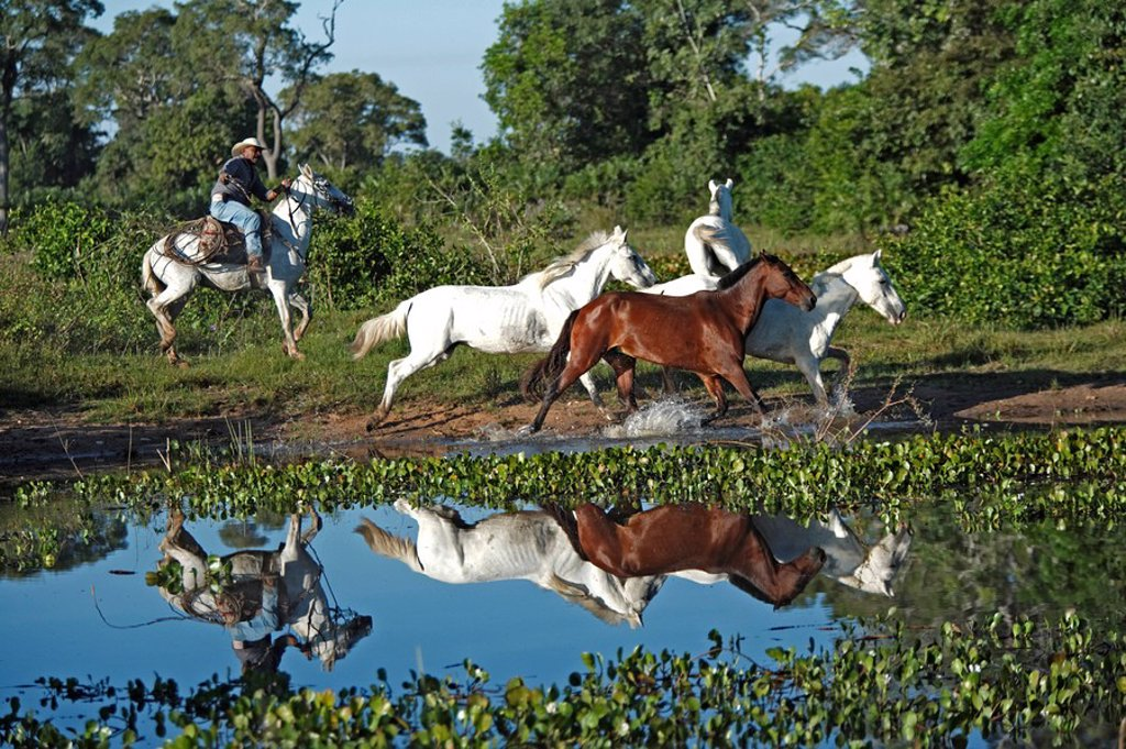 Stock Photo: 4133-12317 Pantanal Cowboy,Pantaneiro,Horse,Pantaneiro Horse,Pantanal,Brazil