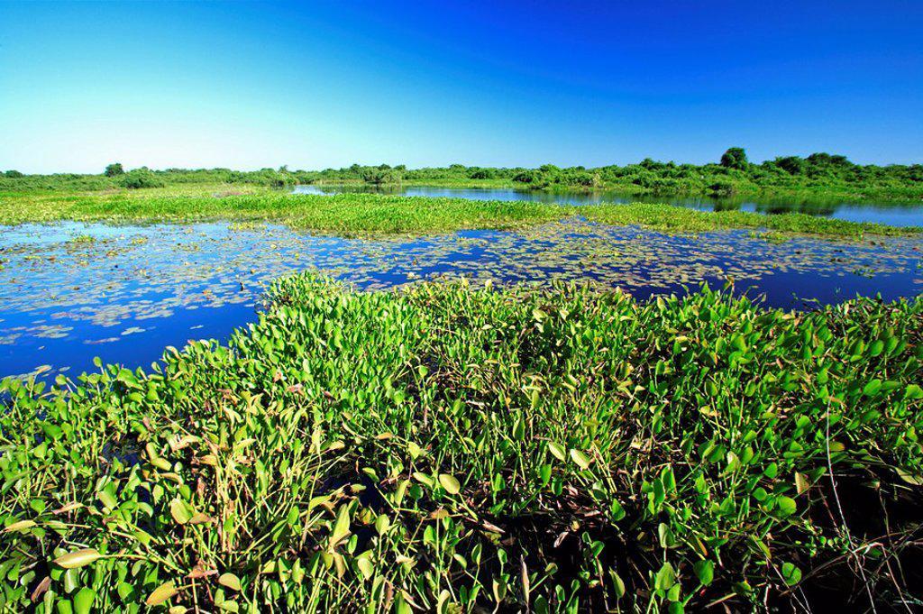 Stock Photo: 4133-19468 Pantanal,Brazil