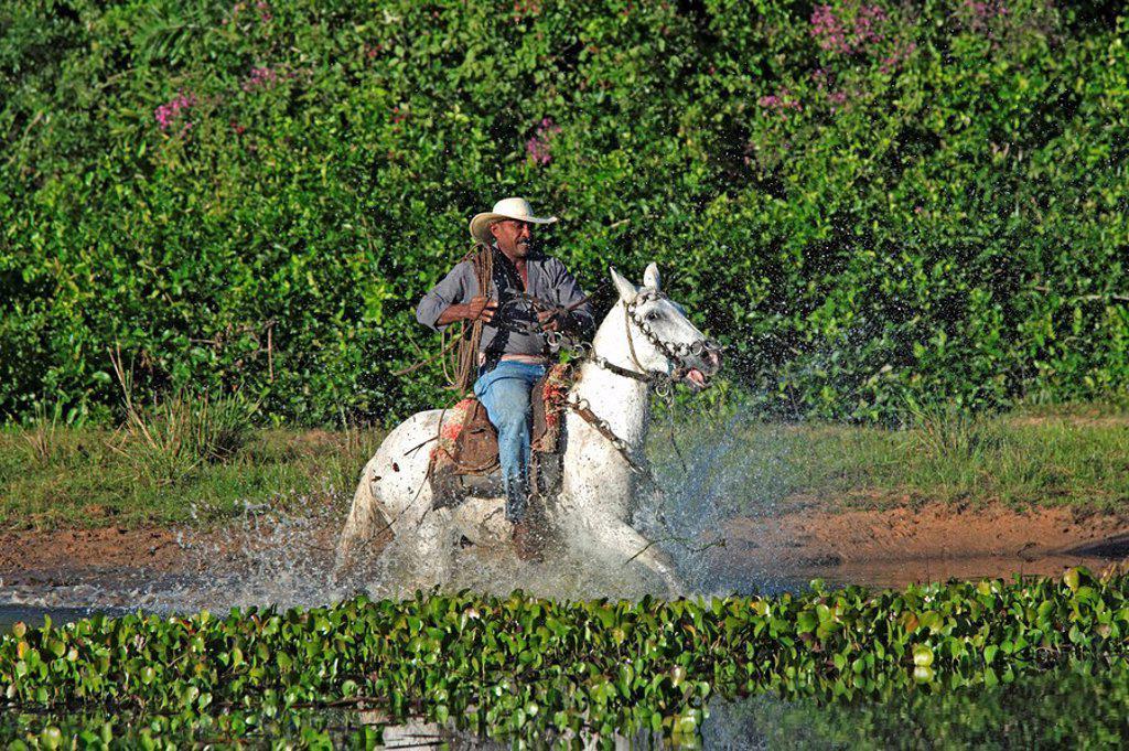 Stock Photo: 4133-22345 Pantanal Cowboy,Pantaneiro,Horse,Pantaneiro Horse,Pantanal,Brazil