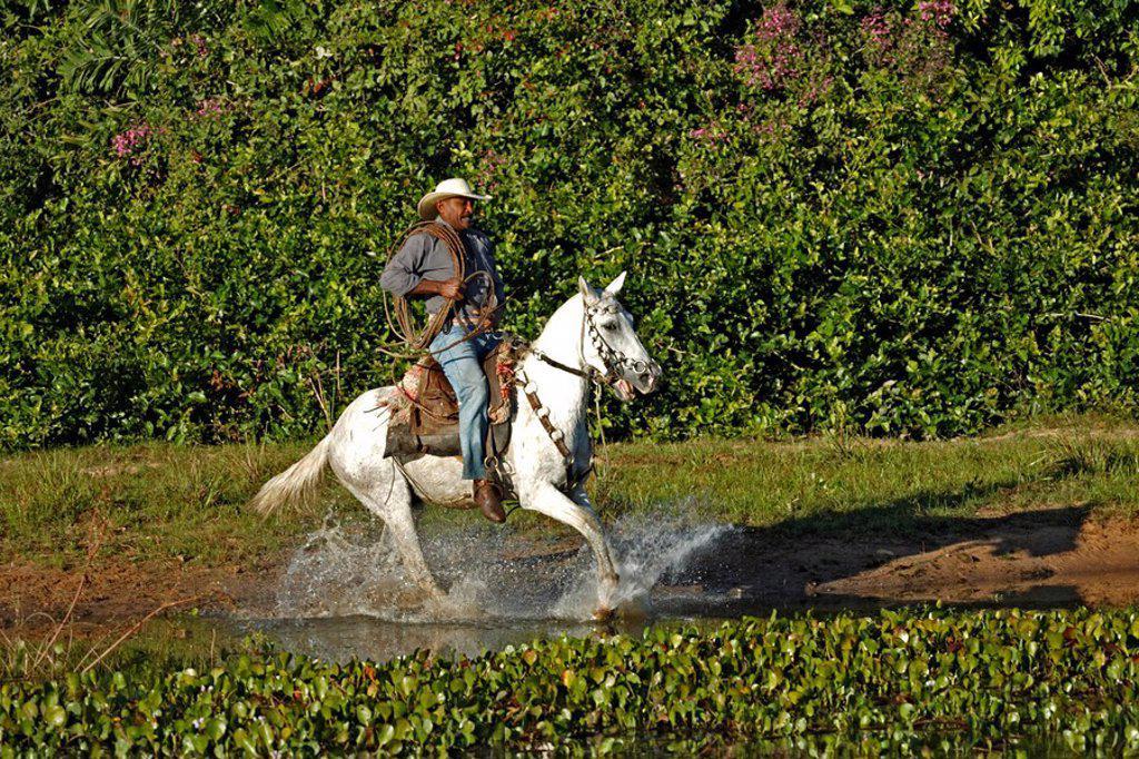 Stock Photo: 4133-23202 Pantanal Cowboy,Pantaneiro,Horse,Pantaneiro Horse,Pantanal,Brazil